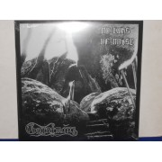 NO RAYS OF NOISE - 180 GRAM